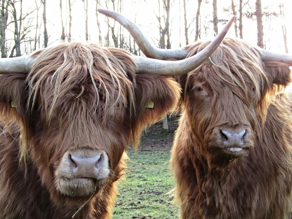racconto viaggio highlands scozzesi