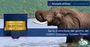 concorso brussels airlines