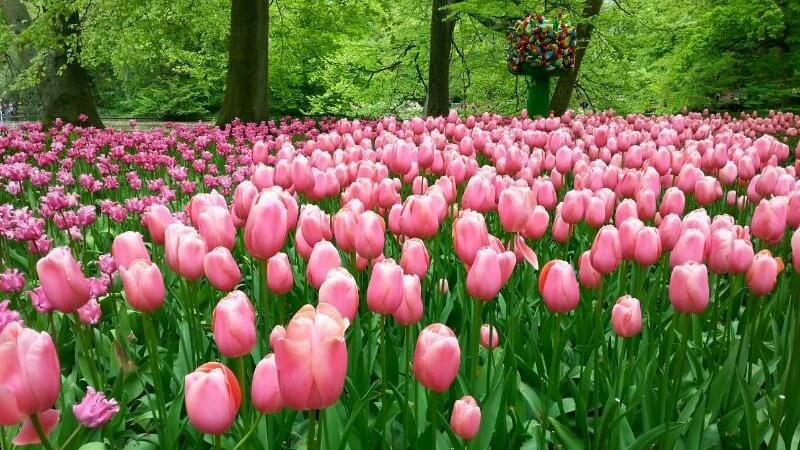 parco keukenhof tulipani olanda