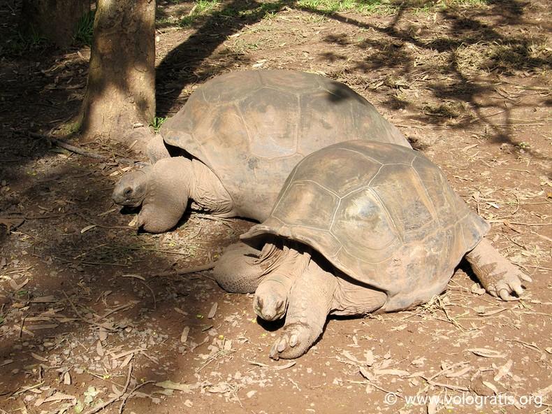 tartarughe giganti chamarel
