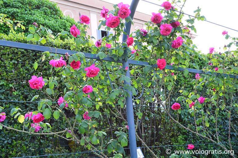 rose roseto comunale di roma