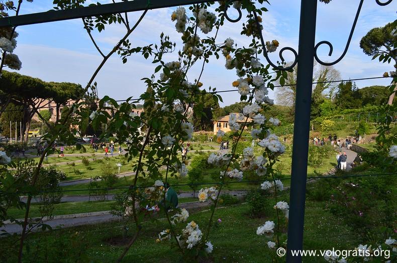 scorcio roseto comunale di roma