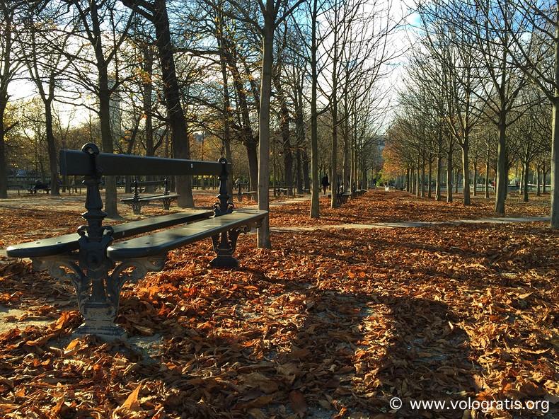 foliage jardin du luxembourg