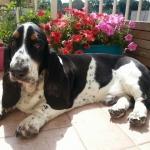 Passaporto per cane e gatto: come richiederlo e ottenerlo