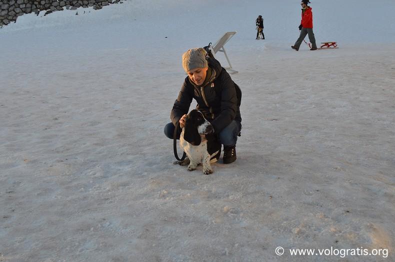 bassethound sulla neve