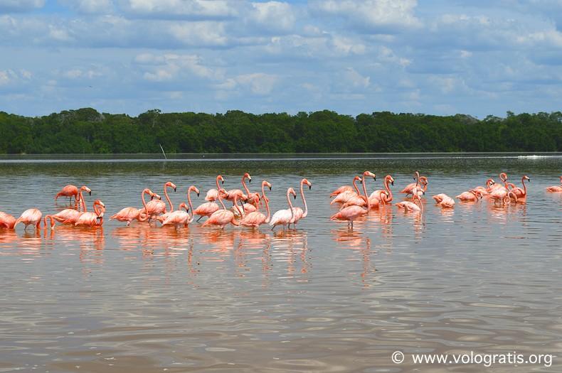 diario di viaggio yucatan celestun fenicotteri rosa