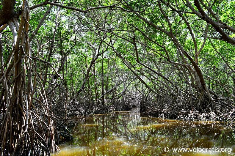 diario di viaggio yucatan celestun mangrovie