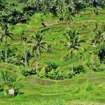 Vinci un viaggio a Bali