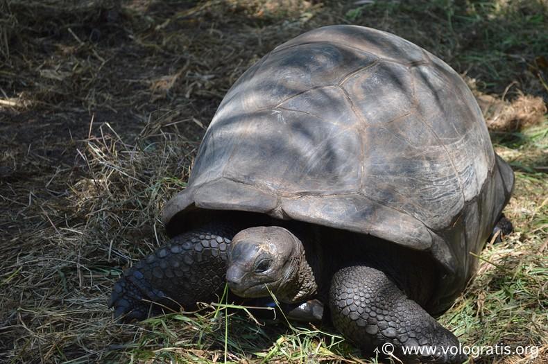 tartarughe viaggio alle seychelles