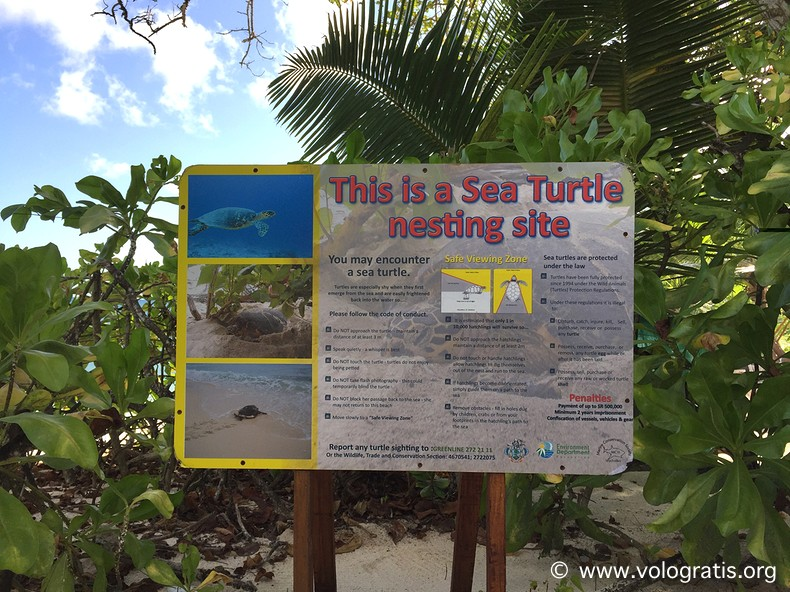 tartarughe marine seychelles