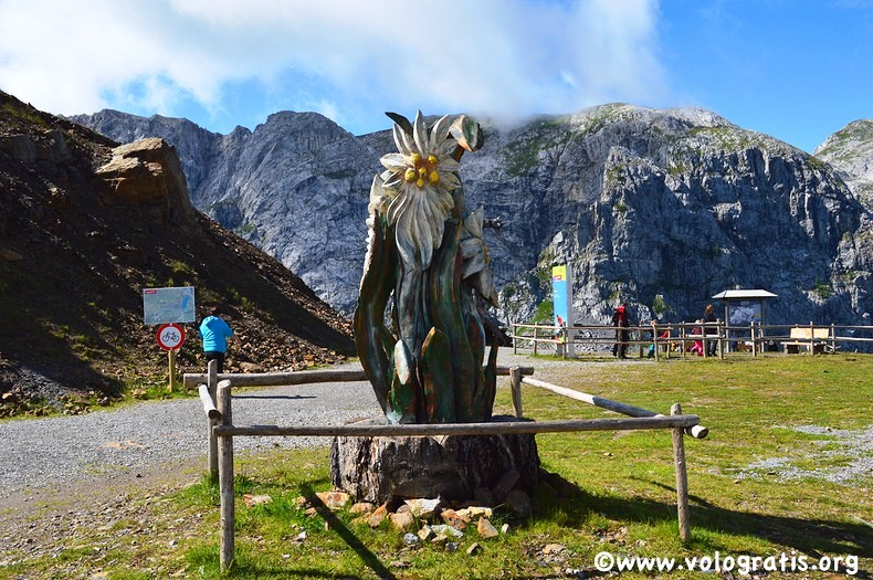foto carinzia stella alpina