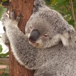 Concorso per vincere un viaggio a Melbourne, Australia
