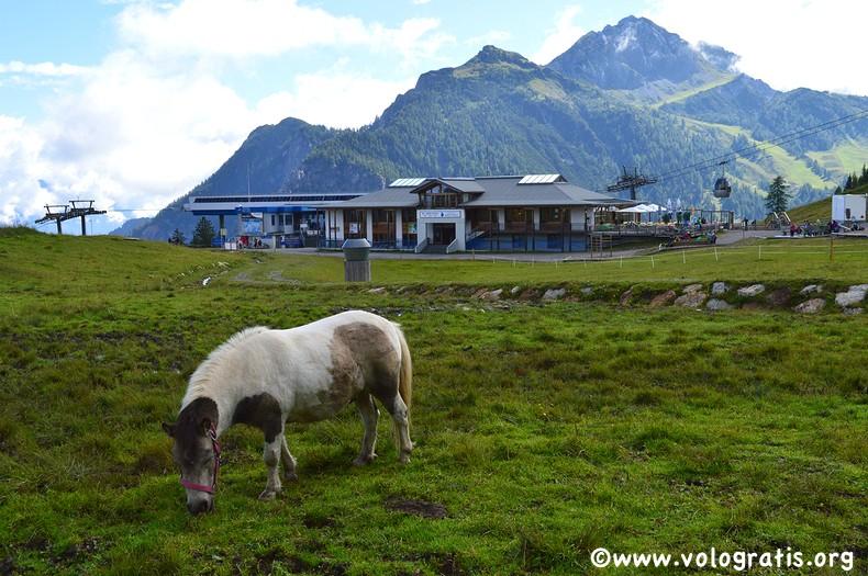 foto carinzia pony
