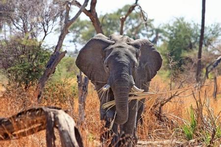 concorso per vincere un safari in sudafrica