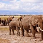 Vinci un viaggio in Kenya