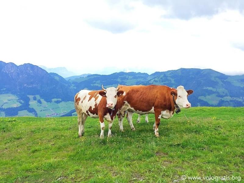foto tirolo austria