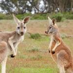 Voli per il Capodanno in Australia a € 480 a/r