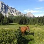 Scarica gratis la guida Lonely Planet Friuli Venezia Giulia