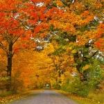 Foliage: i luoghi migliori in cui ammirare i colori dell'autunno