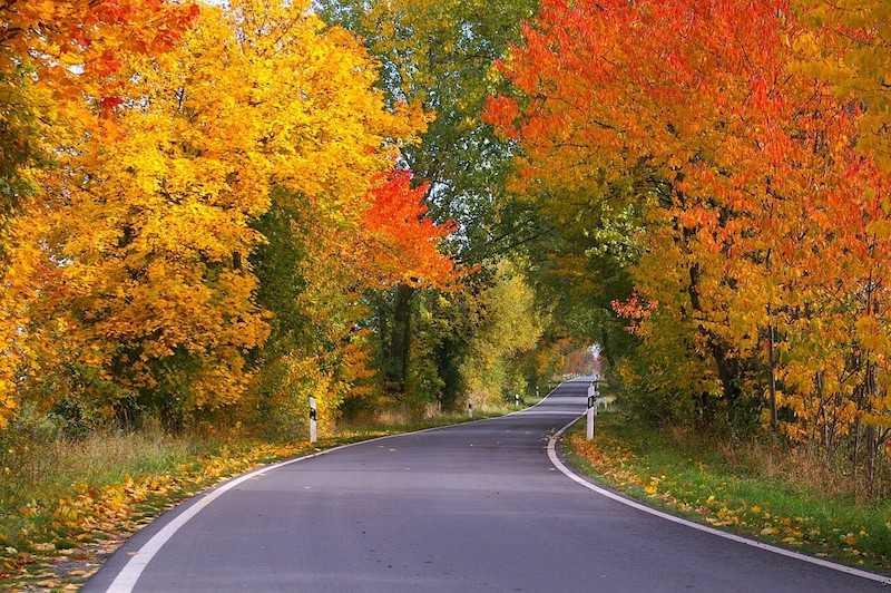 foliage autunno 2