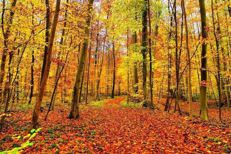 foliage autunno (3)