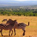 Voli per il Kenya da 335 euro andata e ritorno