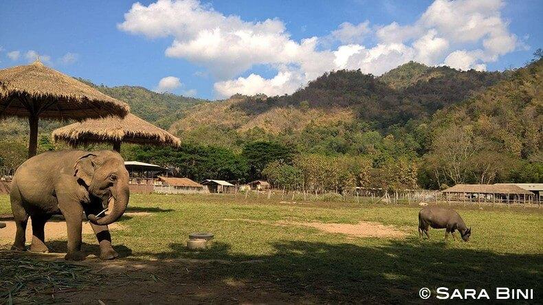 diario di viaggio in thailandia 16
