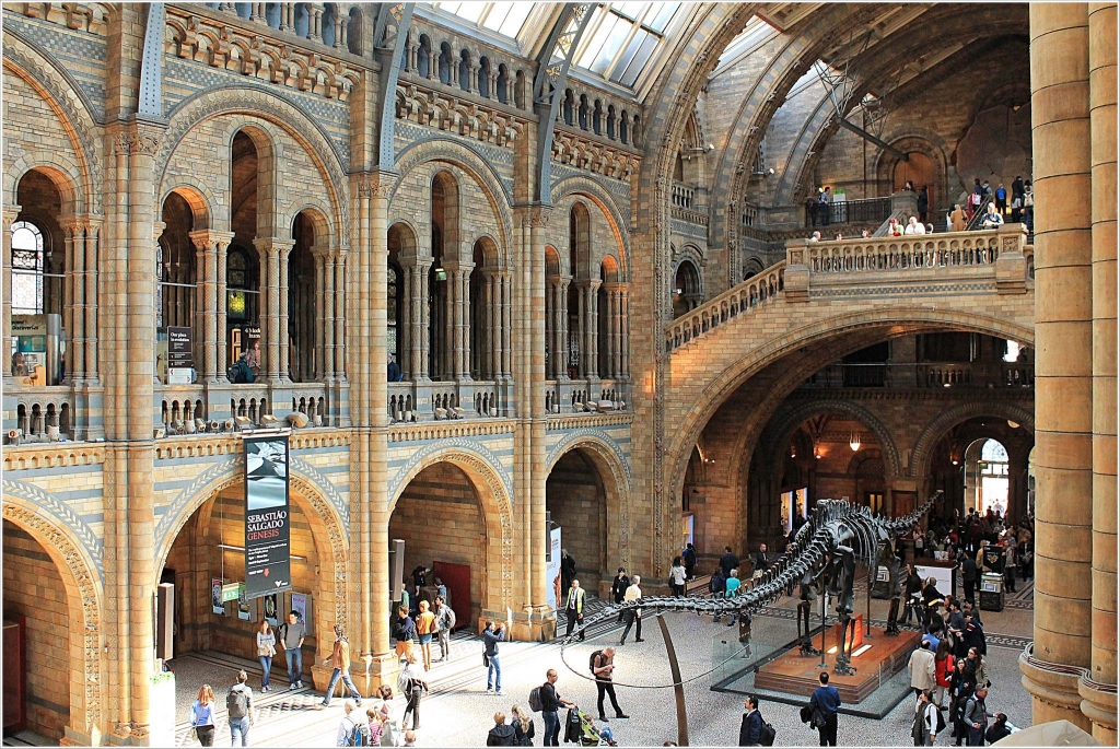 Natural History Museum - Musei a Londra