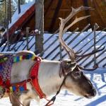 Diario di viaggio nella Lapponia finlandese