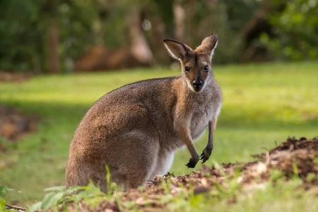viaggiare gratis in australia