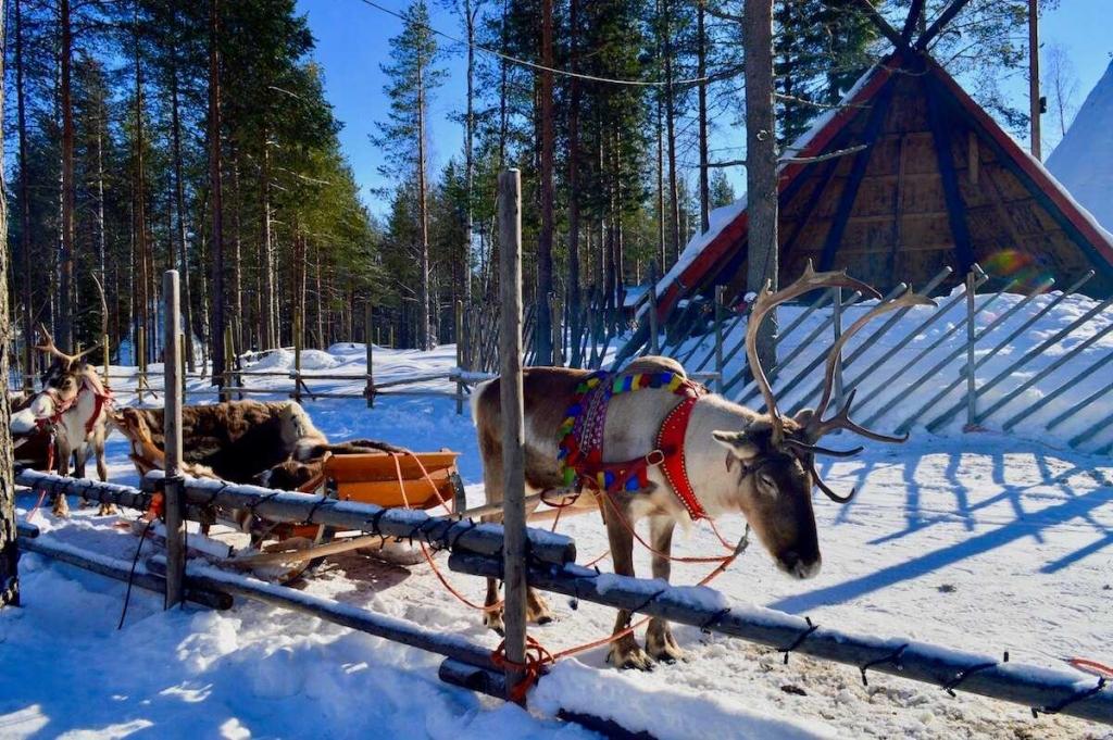 renne casa di Babbo Natale Lapponia