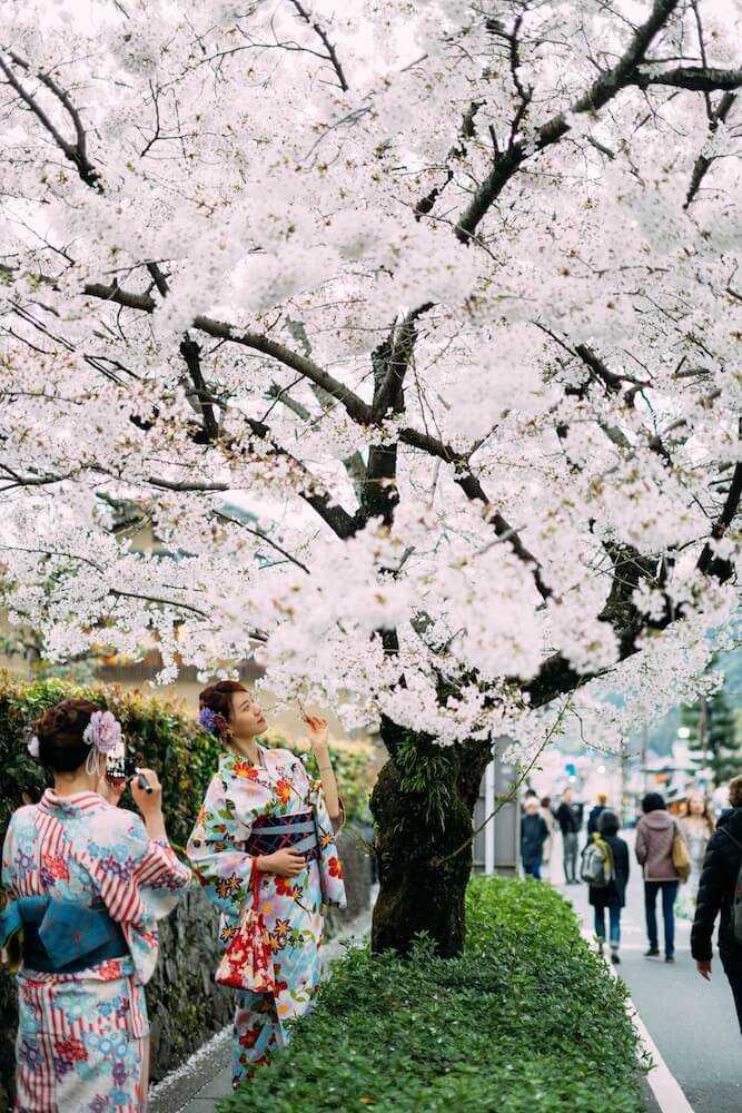 fioritura dei ciliegi in giappone date