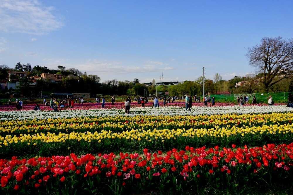 parco tulipani roma (3)