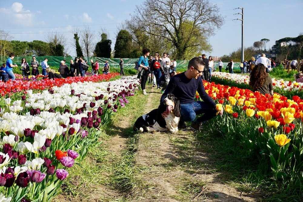 parco tulipani roma (4)