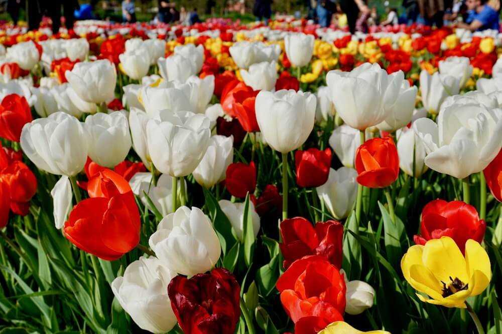 parco tulipani roma
