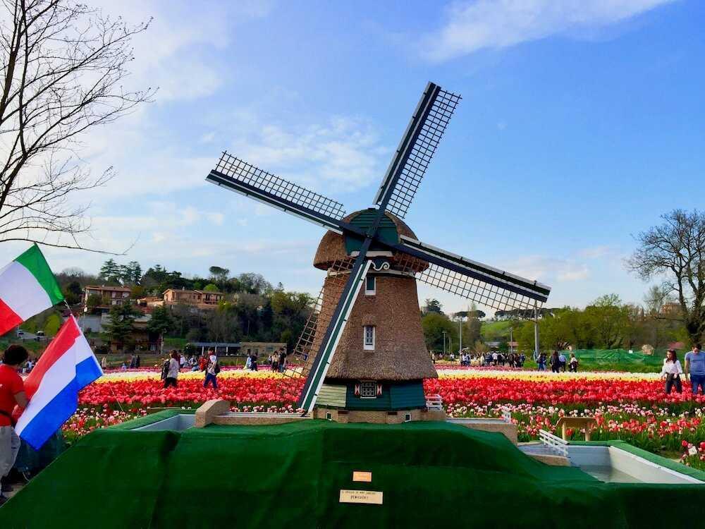 tulipark roma (3)